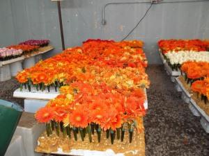 Gerber daisies. My favorites.